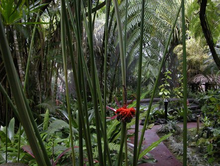 Interesting plant life at the Arenal Resort