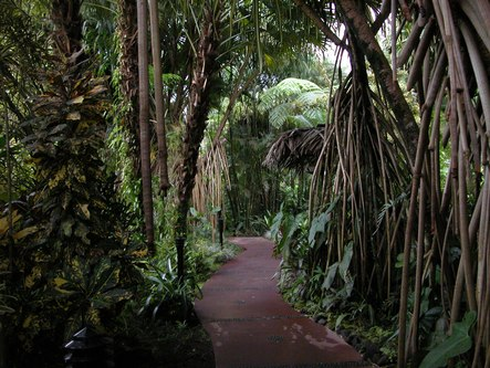 A path at the Arenal Resort